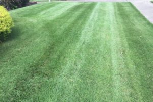 Fresh cut yard by turf tech