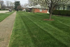 Residential yard mowing