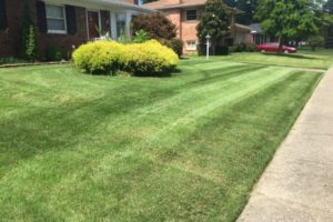 Freshly cut and trimmed front yard by Turf tech