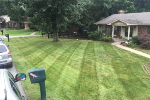 Freshly mowed lawn by turf tech