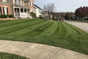 The Freshly mowed residential lawn with beautiful stripes